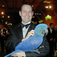 A Businessman Holding a Blue Parrot