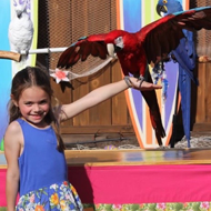 Little Girl Holding a Parrot